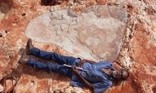 العثور على أقدم آثار لديناصور في أستراليا