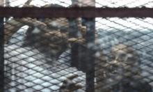 علاء عبد الفتاح: 3 سنين على سجن التنين البمبي