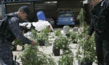 المخدرات: سلاح إسرائيل القديم الجديد ضد الفلسطينيين