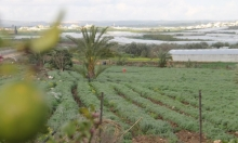 الشعراوية: أراضي المزارعين بين فكي الاحتلال والمصادرة