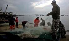 أسبوعان بعد منع الصيد: سمك الوطواط يملأ شواطئ غزة