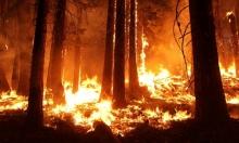 حريق في جورجيا يأكل 420 ألف دونم ويحتاج ستة أشهر لإخماده...