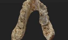 حفريات تلقي بظلال الشك على نشوء البشرية في أفريقيا