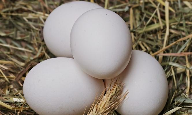 تناول بيضة واحدة يوميا يحمي الأطفال من التقزّم ونقص الوزن