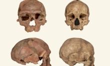 ما هي مراحل اكتشاف جمجمة أقدم إنسان عاقل في المغرب؟