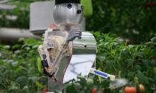 روبوت الحقول: ابتكار لمحاربة الأعشاب الضارة عبر الليزر