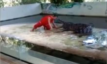 تمساح ينقض على مدربه وسط ذهول الجمهور في تايلاند!