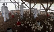 تحورات قد تحول أنفلونزا الطيور إلى وباء عالمي!