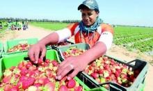 مصر: السعودية حظرت استيراد الفراولة منا