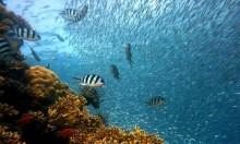 ارتفاع حرارة وحمضية مياه المتوسط يهددان كائنات بالانقراض