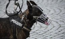 الكلاب كشفته: العثور على 79 ألف يورو داخل معدة شخص في فرنسا