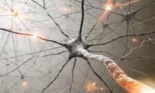 بروتين (تاو)... يتشابك بالأدمغة لتفتيت الذاكرة