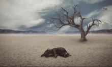تحذير: بدء عصر انقراض جديد على سطح الكرة الأرضية