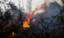 تجدد اندلاع الحرائق في غابات القدس لليوم الثاني