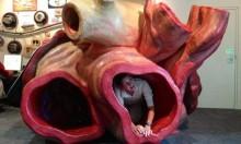 """أكبر قلب على وجه الأرض: متحف كندي يعرض """"قلب الحوت الأزرق"""""""
