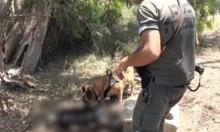 اتهام فلسطيني من نابلس بقتل مستوطنة