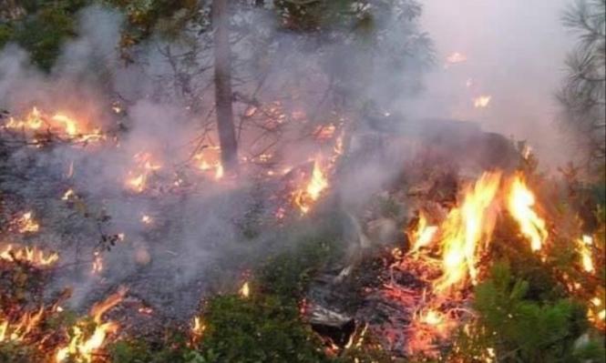 الحرائق تلتهم 2000 هكتار من غابات تونس
