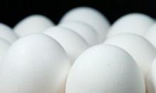 سحب ملايين البيض من الأسواق الأوروبية