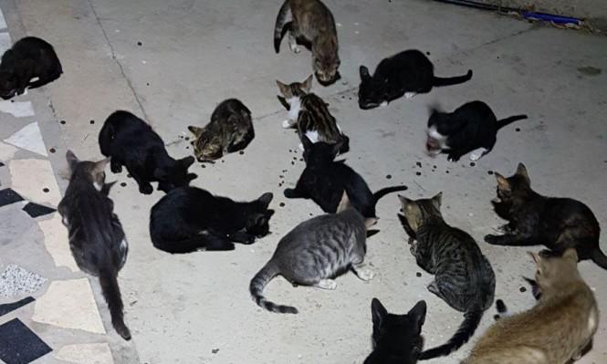 دراسة: تربية الحيوانات الأليفة لها أبعاد بيئية