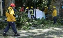 البرتغال: مقتل 12 شخصا سقطت عليهم شجرة