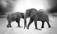 دماغ الفيل أم دماغ الإنسان أيهما يفوق الآخر؟