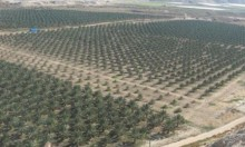 جمعيات حقوقية: الحكومة الإسرائيلية تساهم في تبييض مخالفات سرقة الأراضي