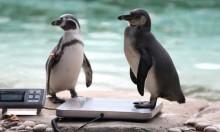 وزن أكثر من 20 ألف حيوان في حديقة حيوانات لندن