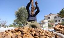 صناعة القطين الفلسطينية مهددة بالزوال