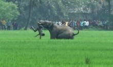 """الهند: فيل يحطم أضلاع رجل حاول التقاط """"سيلفي"""" معه"""