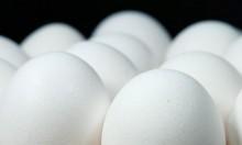 البيض الملوث يصل إلى 40 دولة معظمها أوروبية