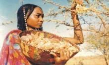 الصمغ ينضم لقائمة ثروات السودان الطبيعية