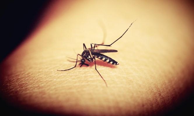 اكتشاف نوع جديد من الملاريا قد يشكل خطرا حقيقيا