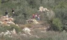 إصابة بغزة برصاص الاحتلال وفي نابلس مستوطنون يسرقون الزيتون