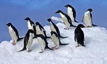 التغير المناخي: نفوق آلاف البطاريق في القطب الجنوبي