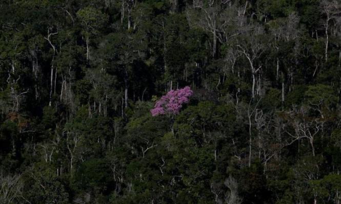 المزيد من الأشجار لمكافحة التغير المناخي