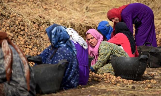 القرارات الحكومية المجحفة: آفة تصيب الزراعة في مصر
