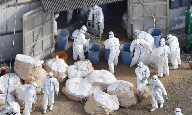 الصين: سلالة جديدة من إنفلونزا الطيور قد تتحول إلى وباء