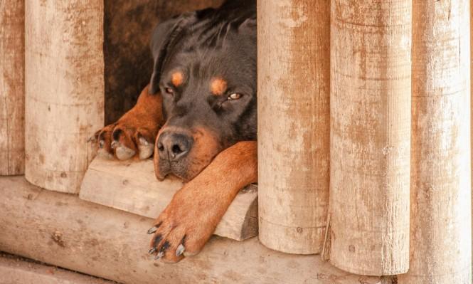 دراسة: طرق تواصل الكلاب مع الإنسان