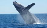 كيف تطوّر البشر؟ قد تجيبنا الحيتان والدلافين