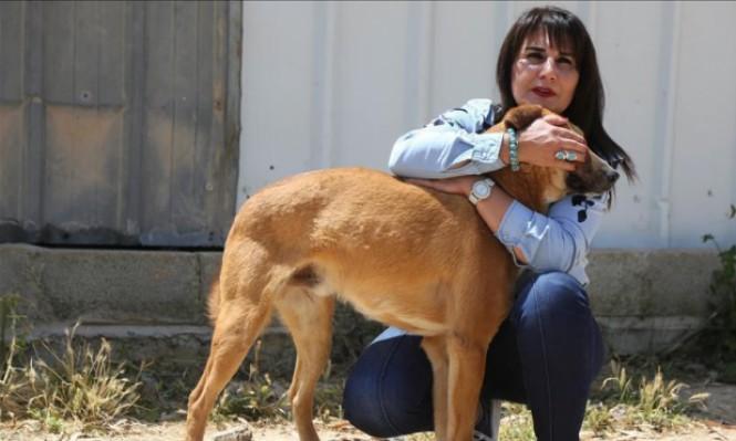 """كيف تساعد الكلاب  حالات """"الربو"""" و""""الأكزيما"""" عند الأطفال؟"""