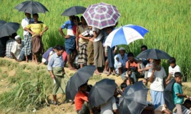 حكومة بورما تحصد حقول الروهينغا بعد تهجيرهم