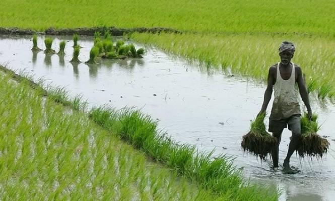 16 مليون مزارع هندي يعلن مقاطعته لإسرائيل