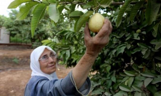 عصير الجوافة: فوائد وقيمة غذائية عليا