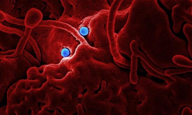 شيفرة اصطناعية تتحكم في آلية عمل الفيروسات