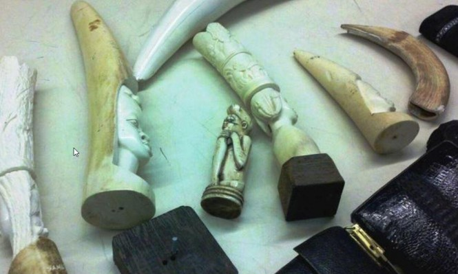 منظمات بيئية تقاضي ترامب لسماحه بتجارة أجزاء الفيلة