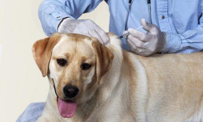 43 إصابة بداء الكلب في الجليل والمرج ووادي عارة منذ 1.1.2017