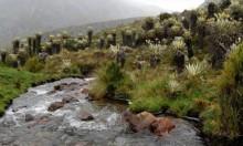 """كولومبيا تطالب بإدراج """"البارامو"""" ضمن مواقع التراث العالمي"""