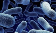 """وفاة 36 شخصًا بسبب بكتيريا """"ليستريا"""" في جنوب أفريقيا"""