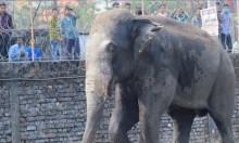 مصرع 5 فيلة في الهند بعد تصادم مع قطار
