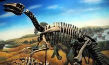 تونس: العثور على أقدم آثار لديناصورات تعود لـ150 مليون سنة